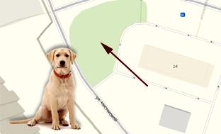 Выгул собак в Трехгорке